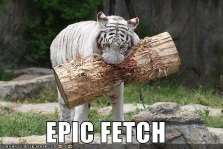 funny-pictures-tiger-fetches-a-large-trunk